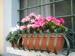 Windowflowerbox_3